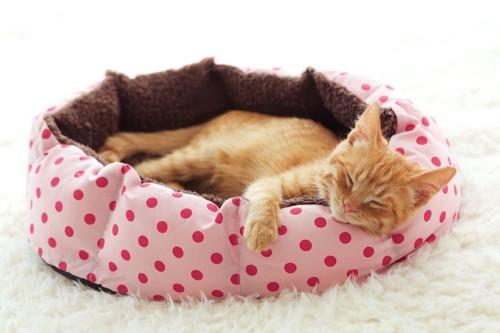 ピンクの猫用ベッドで眠る猫