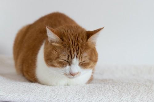 ベッドの上で香箱座りで眠る猫