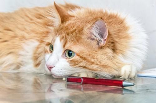 赤いペンとくつろいでいる猫
