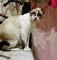 珍しい柄猫18