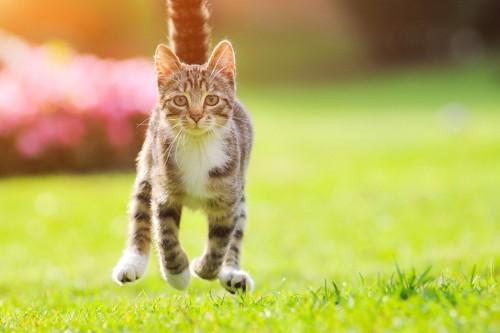 柴の上を走る猫
