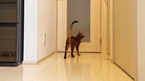 立っている猫の後ろ姿