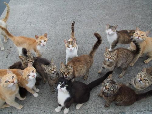集まる野良猫