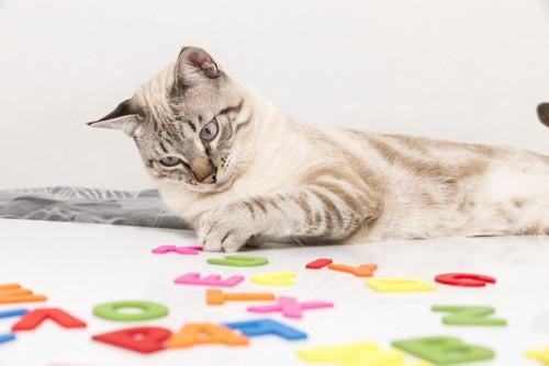 選考する猫