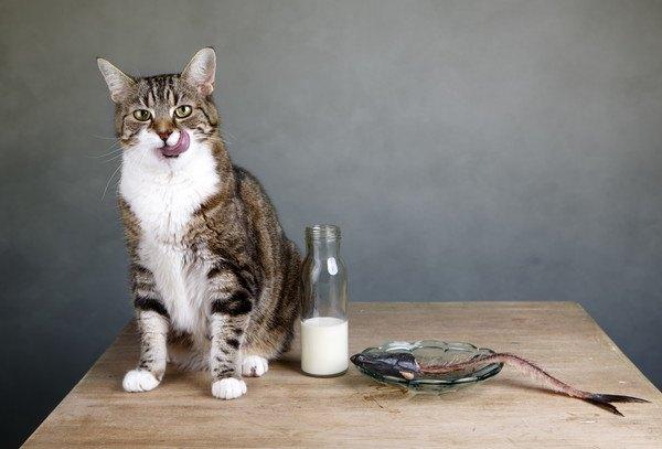 テーブルにあるお魚と猫