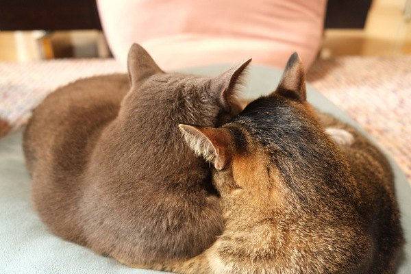 仲良く並んで座る兄妹猫