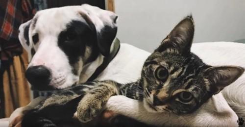 成長した犬と子猫