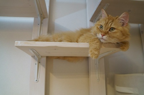 キャットウォークでくつろいでいる猫