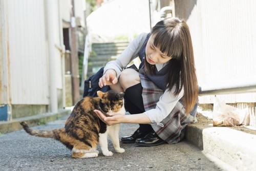 猫をなでる女子高生