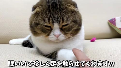 前足を触られる猫