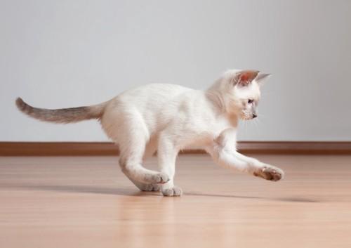 走って遊ぶ子猫