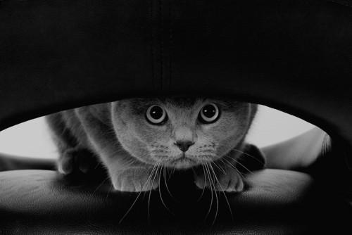 驚いて隠れている猫