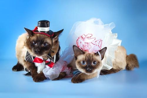 ウエディングドレスと猫