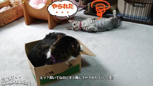 箱にはいる猫と仰向けの猫