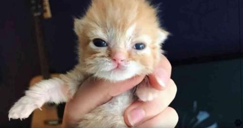 人の手の中に目が開いたばかりの子猫