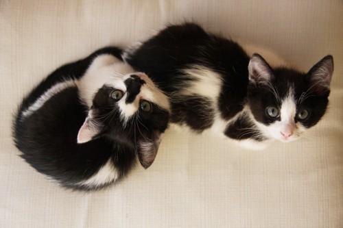 見上げている2匹の猫