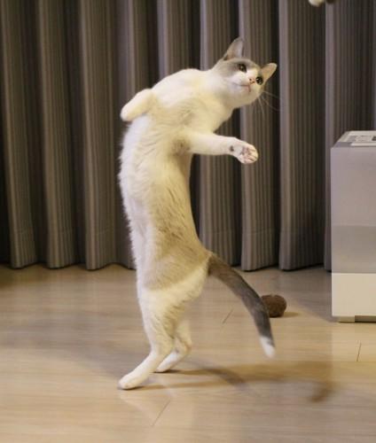 踊るすず香ちゃん9