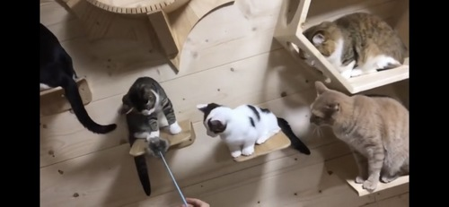 次は猫じゃらし