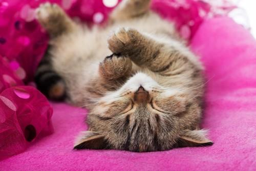 お腹を見せて寝転ぶ猫