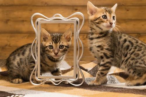 ブランケットの上の二匹のベンガルの子猫