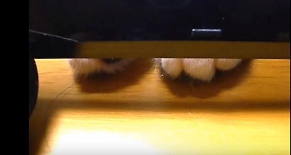 物の下に隠れる猫の足