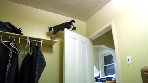 ドアの上に乗って棚まで行く