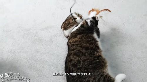おもちゃで遊ぶ黒系の猫