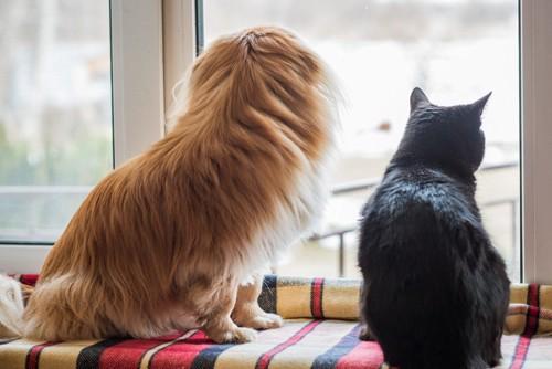 外を見る猫と犬