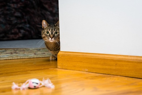 コチラを伺う猫