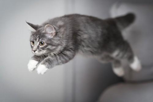 飛んでる猫