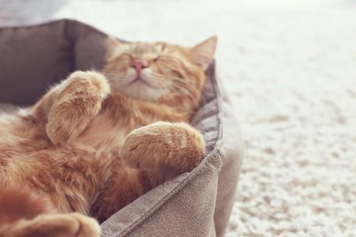 猫用のベッドで眠る猫