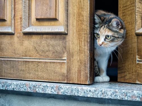 ドアの隙間から出ていこうとする猫