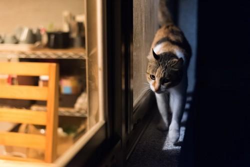 薄暗い中で窓辺を歩く猫