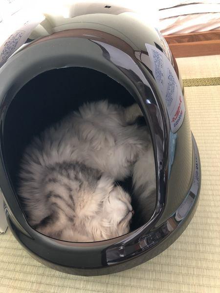 トイレで寝ちゃう猫