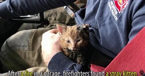 車内で消防士の膝に乗る子猫