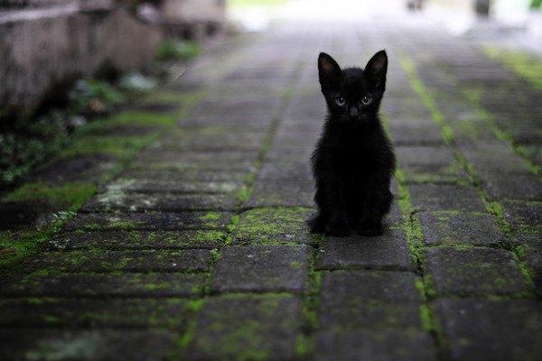 石畳に小さい黒猫