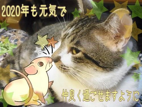 イラストのネズミと猫