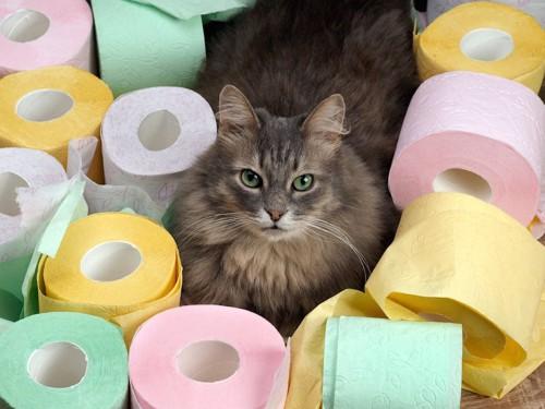 カラフルなトイレットペーパーに囲まれた猫