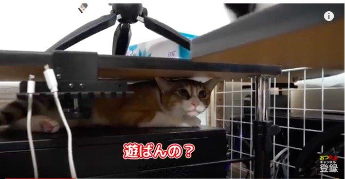 立ち去る猫
