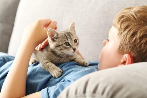 ソファーで少年に撫でられている猫