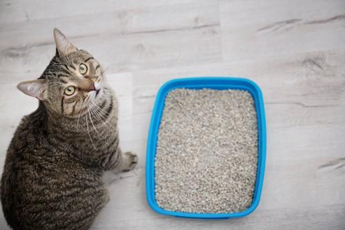 猫用トイレの横に座って見上げる猫