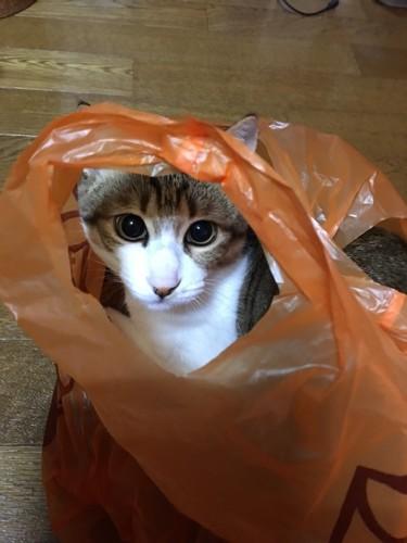 オレンジ色のビニール袋から顔を出している写真