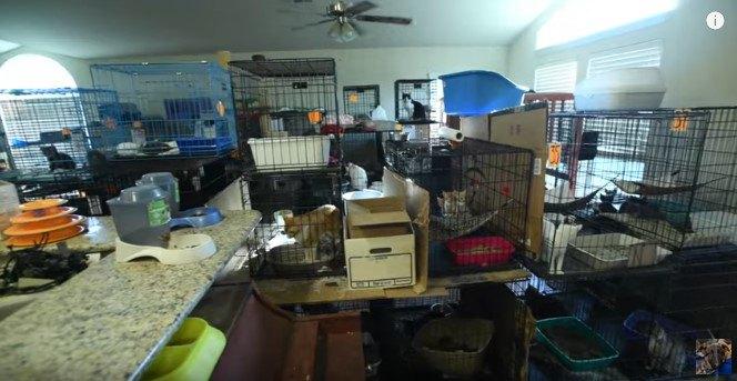 多頭飼い崩壊の部屋