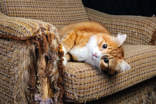 肘掛けがボロボロのソファと長毛の猫