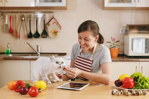キッチンでペルシャ猫と若い女性