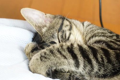 手で顔を隠して寝ている猫