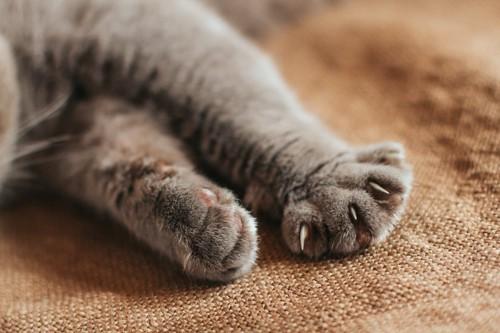 横になっている猫の前足