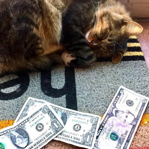 寝ている猫とお金