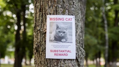 迷い猫の張り紙