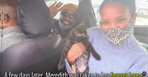 車の中に3人の男女と子猫
